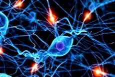 1461 ключ к 130 заболеваниям мозга
