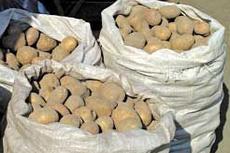 Зачем премьер-министру пять мешков картошки?