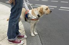 В Беларуси появилась электронная собака-поводырь